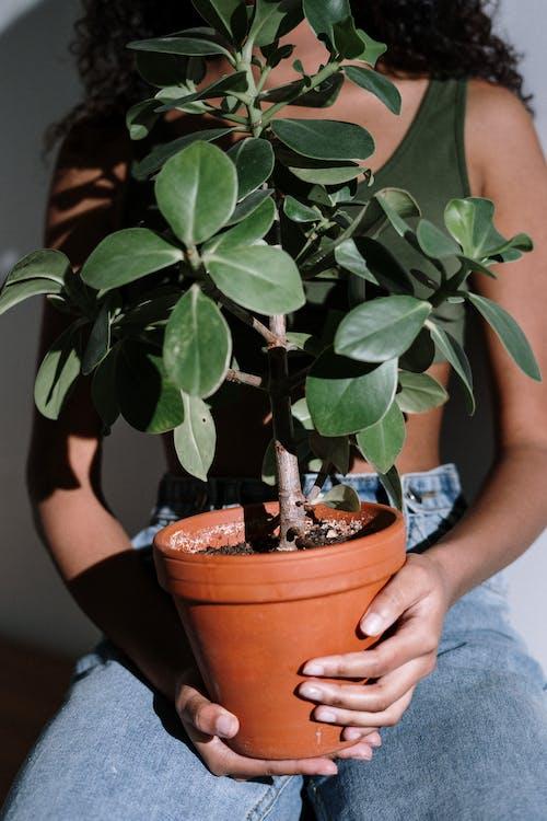 Gratis stockfoto met anoniem, bloem vasthouden, bloempot