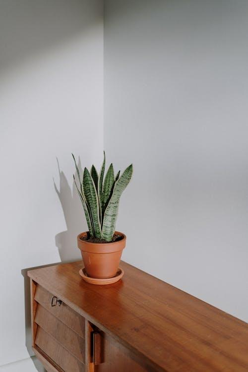 Kostenloses Stock Foto zu blumentopf, büro, dekor