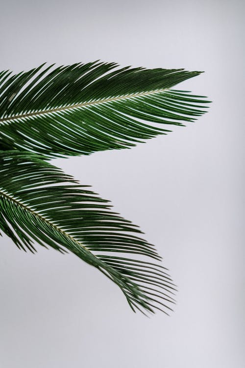 Free stock photo of Big leaf, blank, copy space, detail