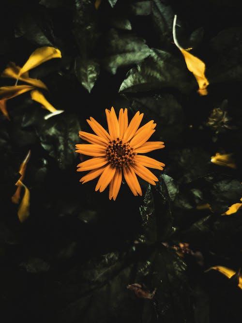 Fotos de stock gratuitas de al aire libre, arte floral, azul oscuro