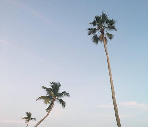 フロリダ, ヤシの木, 午後の無料の写真素材