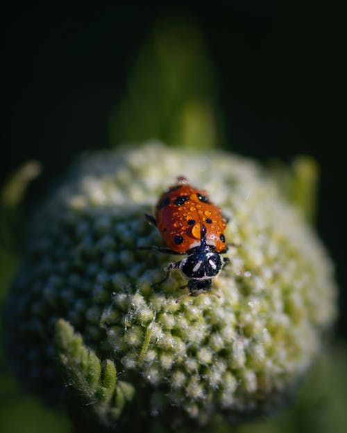 Orange and Black Ladybug on Green Plant