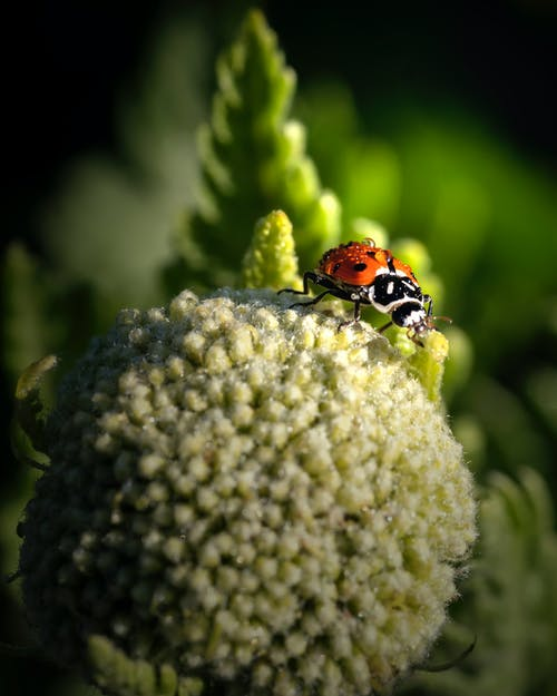 Red and Black Ladybug on Green Flower