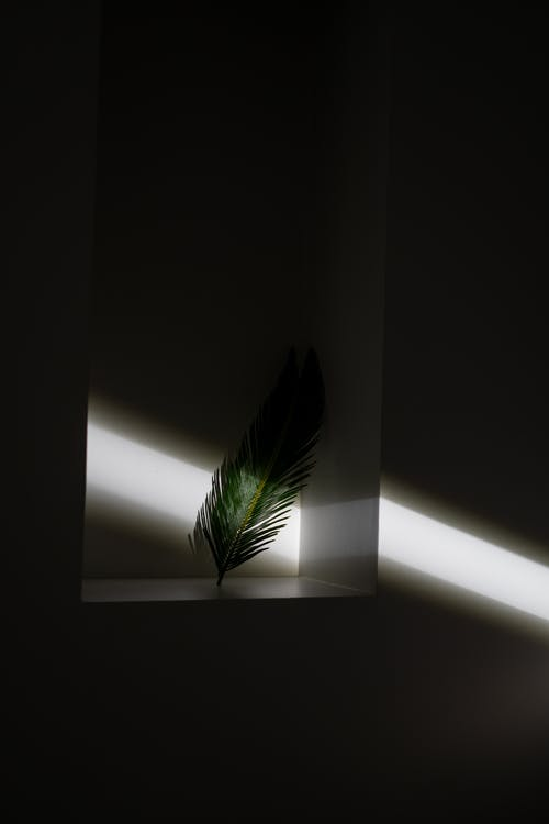 Thin palm tree leaf on white surface in dark room