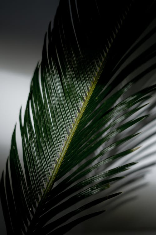 Big green palm tree against white wall