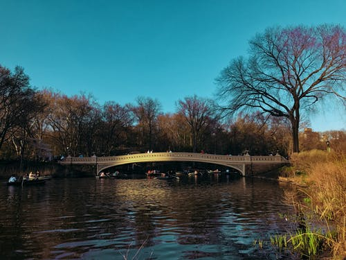 Free stock photo of centralpark, mobilechallenge, newyork