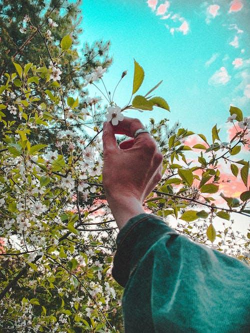 Photos gratuites de angle faible, anonyme, arbre, arôme