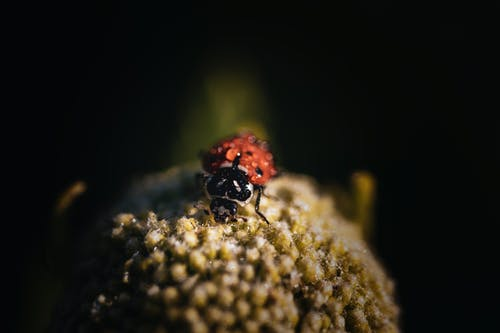 Red Ladybug Perched on Green Plant in Close Up Photography