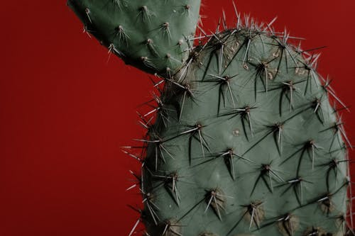 仙人掌, 仙人掌植物, 刺, 增長 的 免费素材图片