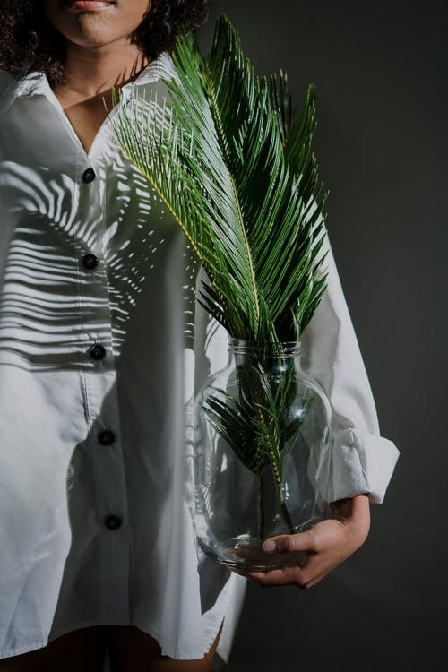 Person in White Button Up Shirt Holding Green Plant