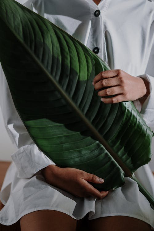 Person in White Dress Shirt Holding Green Leaf