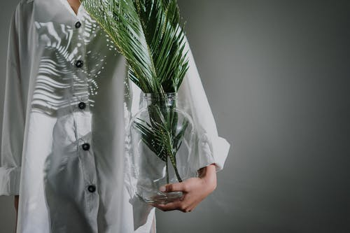 Person Holding Green Plant in White Button Up Shirt