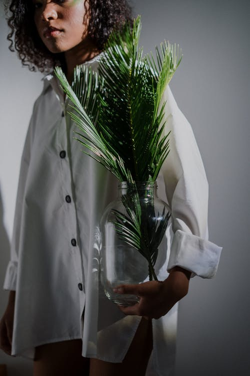 Person Holding Green Plant in Clear Glass Vase