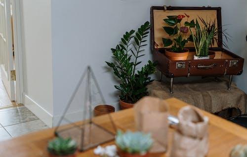 Základová fotografie zdarma na téma domácí rostliny, domácí zahrádka, domácí zahrádkářství