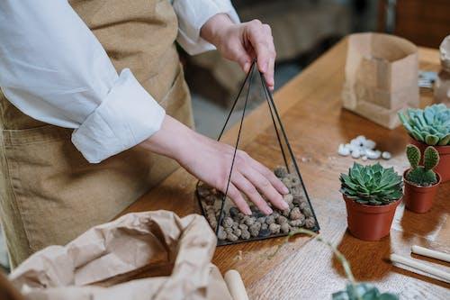 Бесплатное стоковое фото с florarium, ваби-саби, выращивать