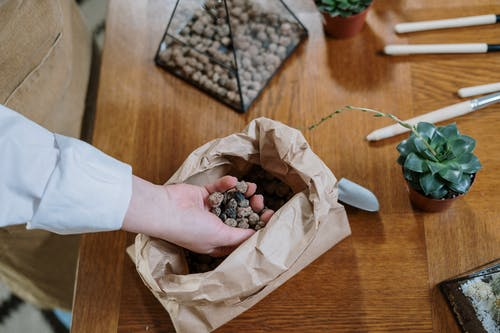 Person Holding Brown Paper Bag With Black Round Fruit