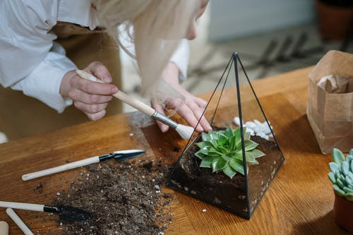 Person Holding White Chopsticks and Green Vegetable on Brown Wooden Chopping Board