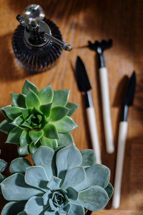 Бесплатное стоковое фото с flat lay, ботаника, ботанический