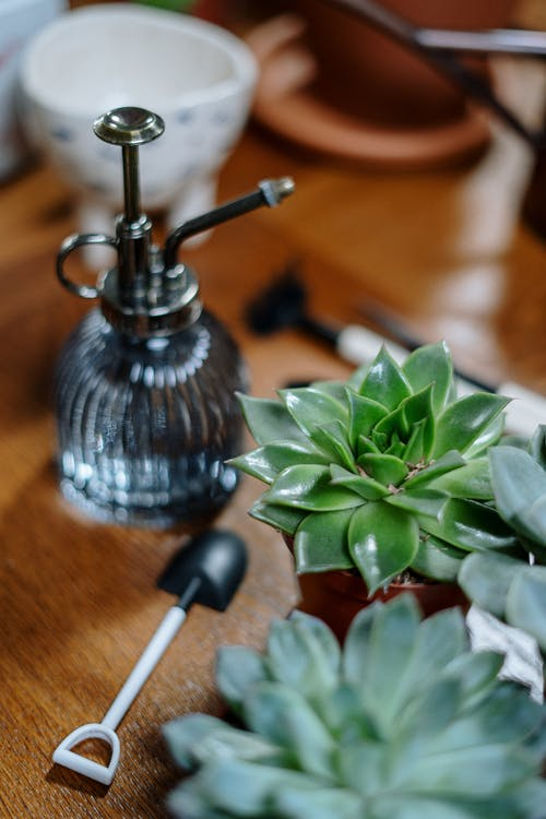 Green Plant on Silver and Black Table Lamp