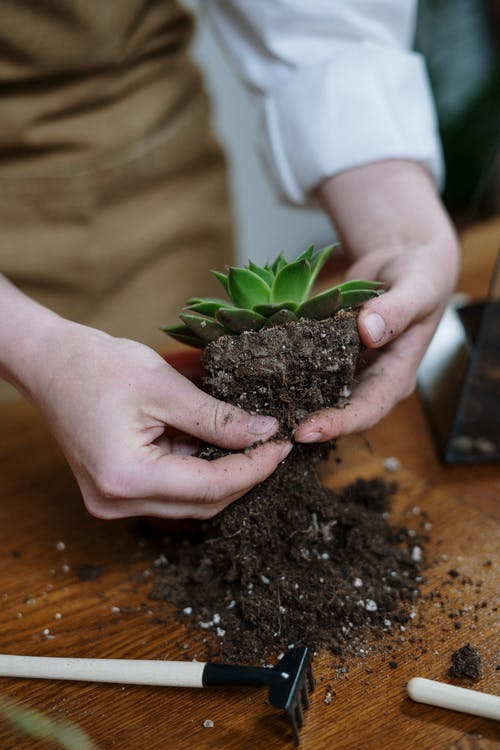 Person Holding Green Plant in Brown Pot