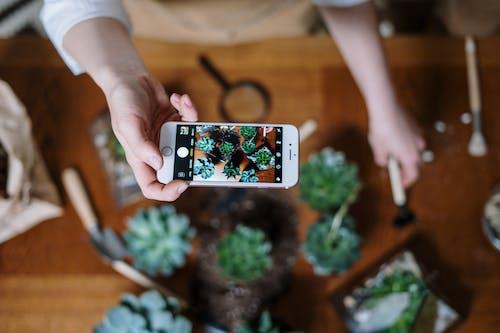 Kostenloses Stock Foto zu blumenzucht, boden, botanik