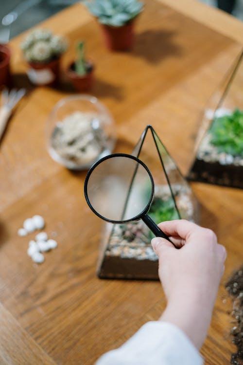 Kostenloses Stock Foto zu blumenzucht, botanik, botanisch