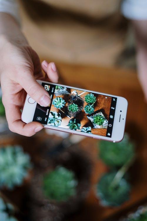 คลังภาพถ่ายฟรี ของ การถ่ายภาพมือถือ, การปลูกดอกไม้, ซักคิวเลนต์, ดิน