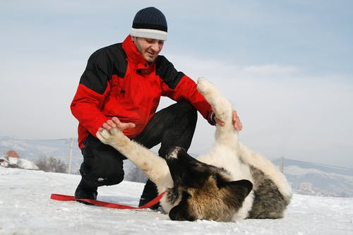 Smiling man playing with dog on snowy terrain