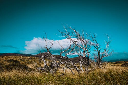 Free stock photo of beauty in nature, blue, chile, grass