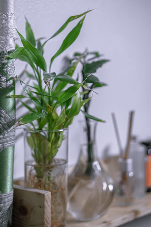 Vase with tender green plant twigs on shelf