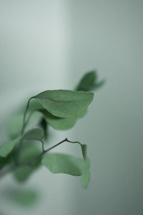Fragile green plant leaves on thin twigs growing against plain white wall in light room