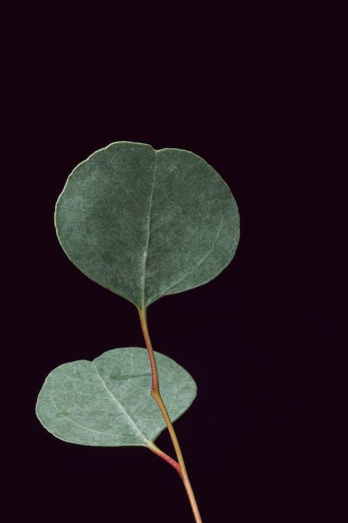 Kostnadsfri bild av blad, blomma, botanisk, disjunkta