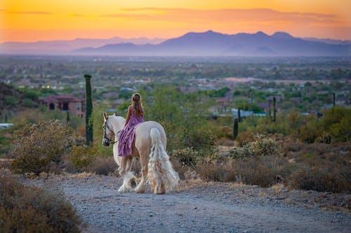 Ingyenes stockfotó állat, állatállomány, emlős, fehér ló témában