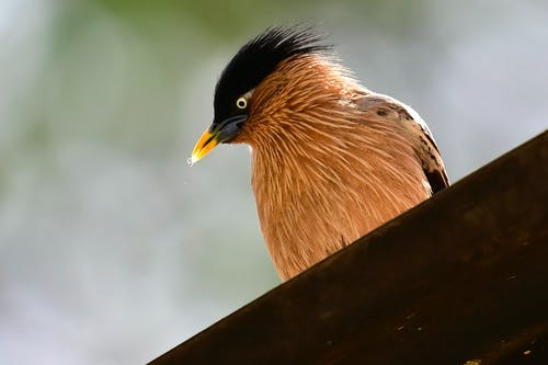 Close-Up Photo of Bird