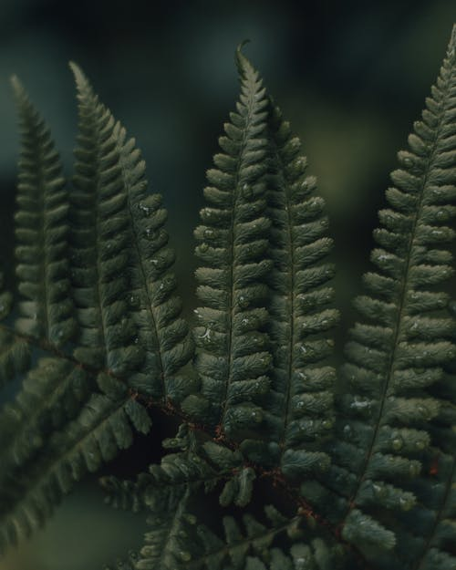 Immagine gratuita di albero, astratto, autunno, biologia