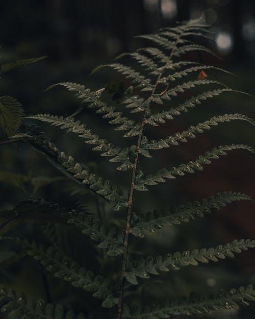 Immagine gratuita di albero, ambiente, angolo alto, armonia