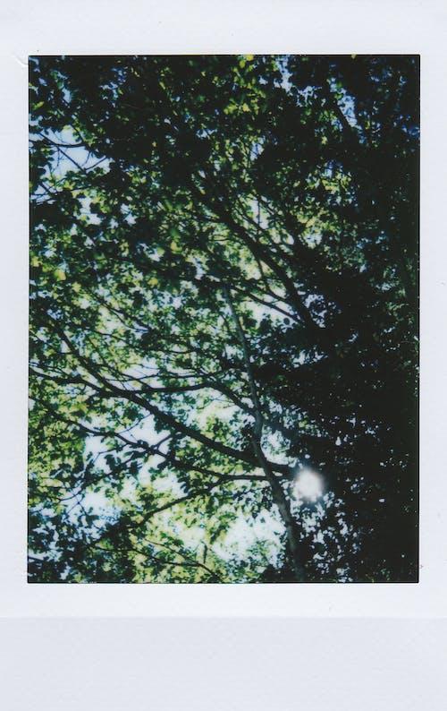Free stock photo of nature, polaroid