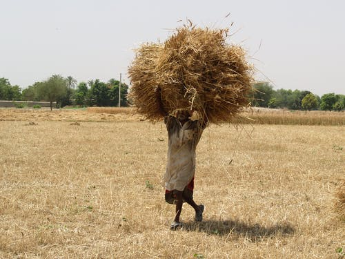 Photo of Man Carrying Hay Bale While Walking on Hayfield