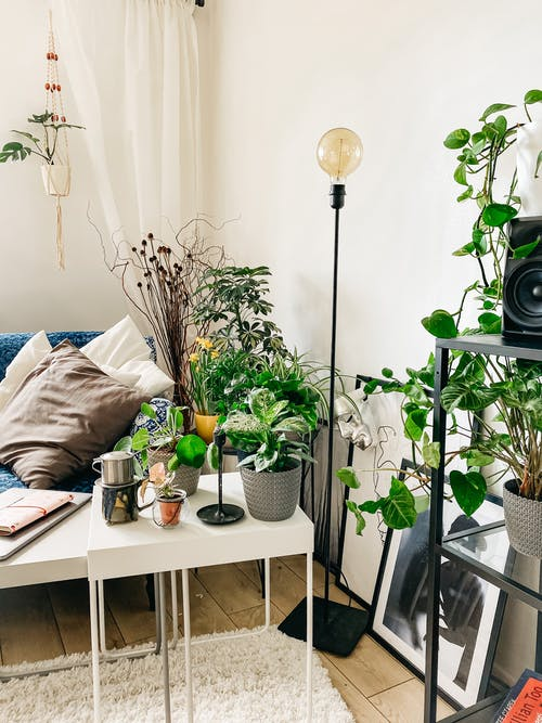 Interior details of stylish room with assorted houseplants