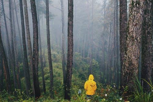 Photos gratuites de arbres, asie sauvage, aventure, bois
