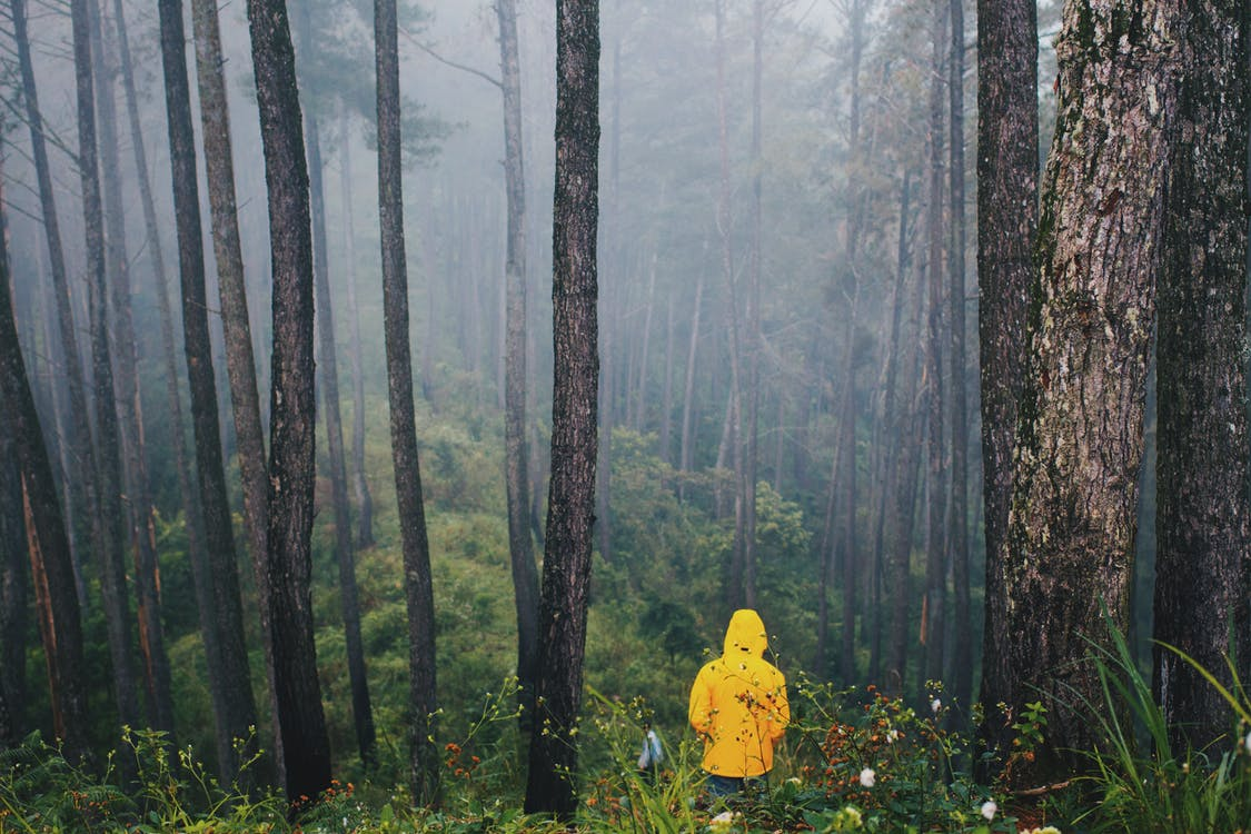 Photo of Person in Yellow Jacket Standing in Forest