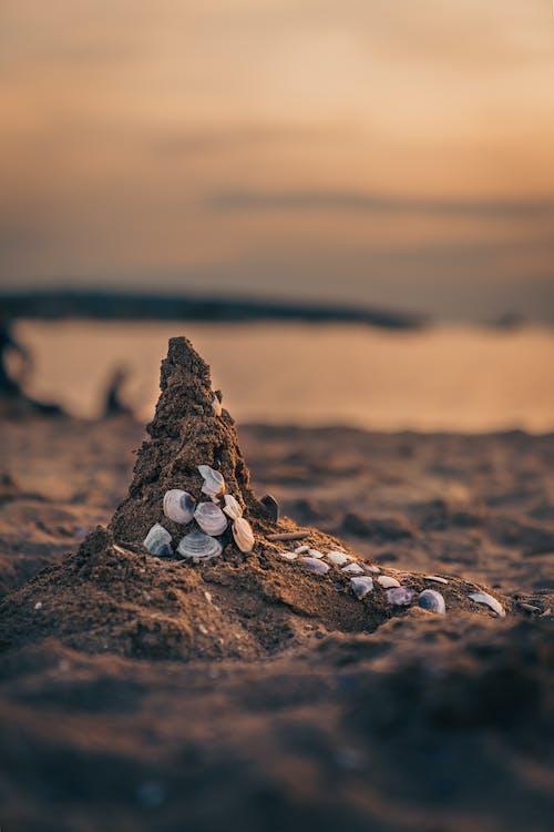 Photo of Seashells on Brown Sand