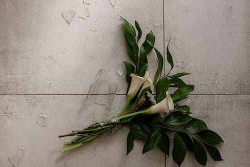Gratis stockfoto met bloemen, gebroken vaas, geschil