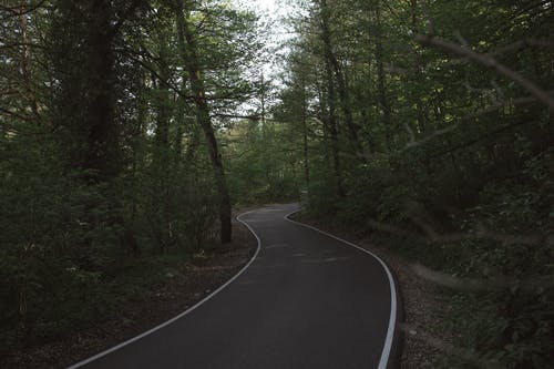 Photo of Paved Pathway Between Trees