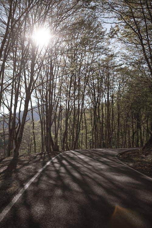 Imagine de stoc gratuită din arbori, asfalt, călătorie