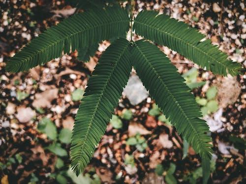 Darmowe zdjęcie z galerii z botanika, delikatny, flora