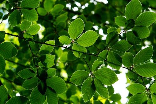 Green Leaves in Macro Shot