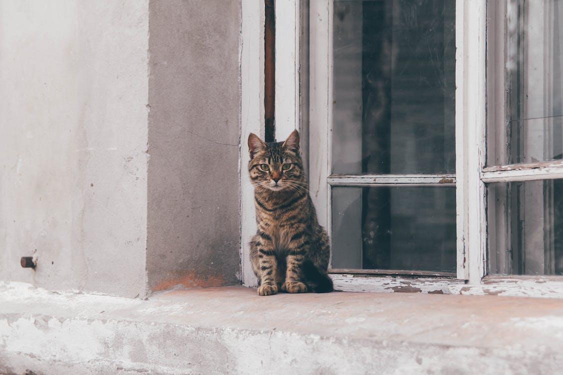 concentrazione, finestra di vetro, gatti
