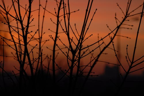 Silhouette of delicate tree branches against sunset sky