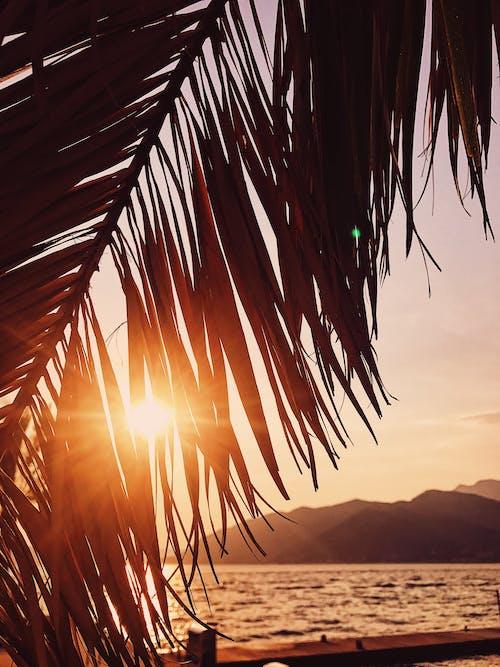Sun shining through palm tree branch